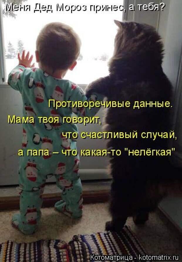 1451492440_kotomatritsa_xs