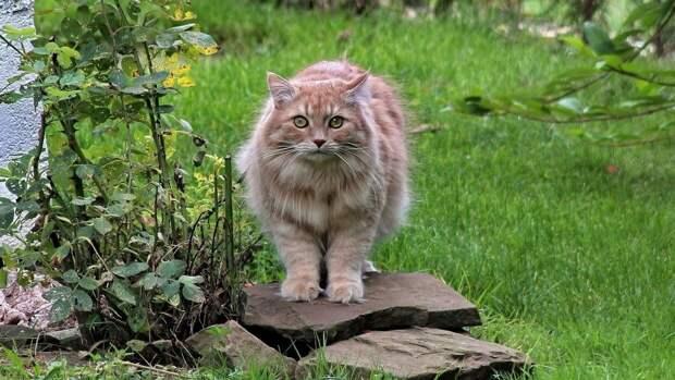 Врач-инфекционист объяснил, почему беременным не стоит заводить кошек