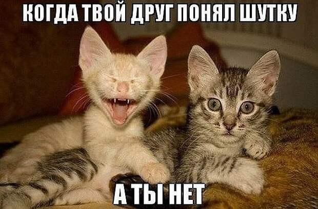 Веселые приколы с котами