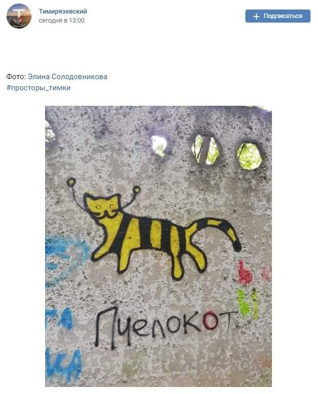 Фото дня: в Тимирязевском лесу заметили «пчелокота»