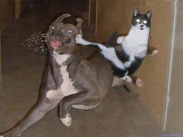 DataLife Engine Версия для печати Comedy photos of funny cats