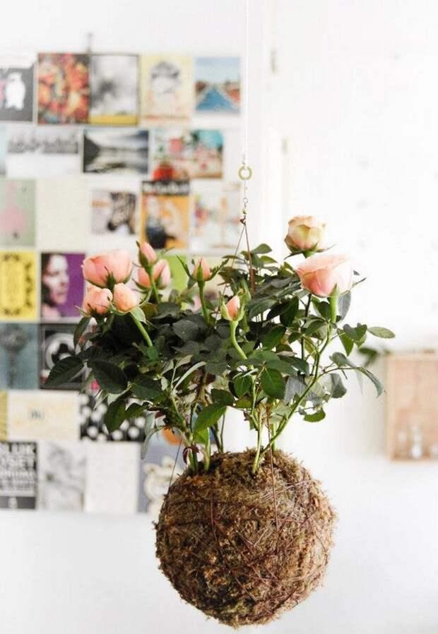модные домашние растения