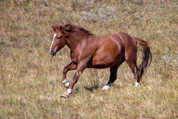 Бег лошади!