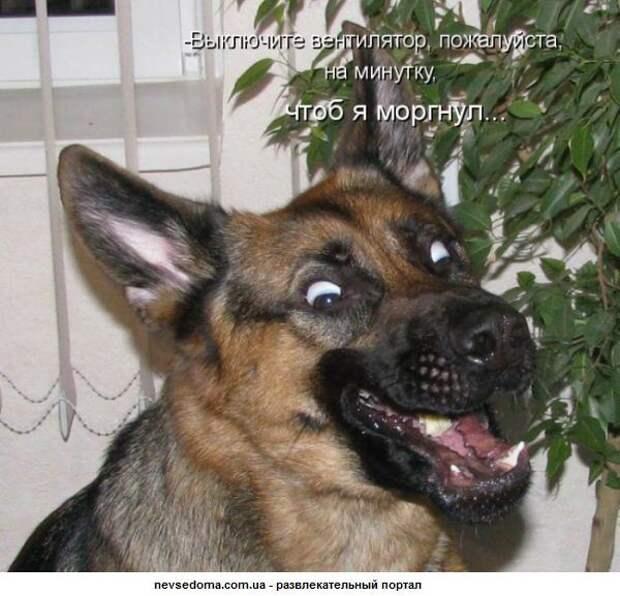 А ты, животинка, отдал налоги?