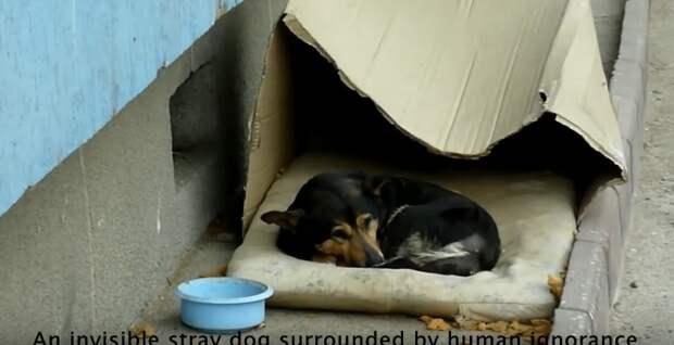 Пес терпеливо лежал и ждал, когда кто-то обратит на него внимание
