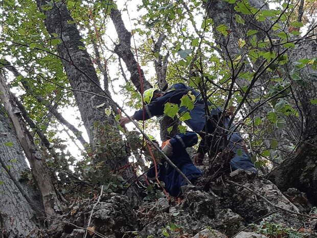 В Крыму парапланерист застрял на дереве в десяти метрах от земли