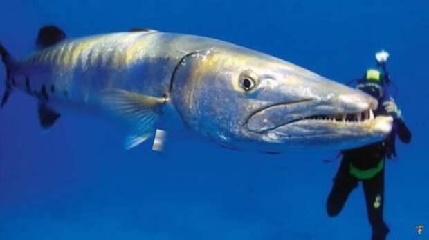 Видео: Самые опасные рыбы, с которыми лучше не связываться