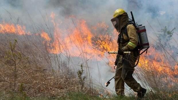 Спецслужбы США изучают видео, где над лесом распыляют зажигательную смесь