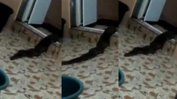 Неизвестное змееподобное существо выползло из туалета в Малайзии