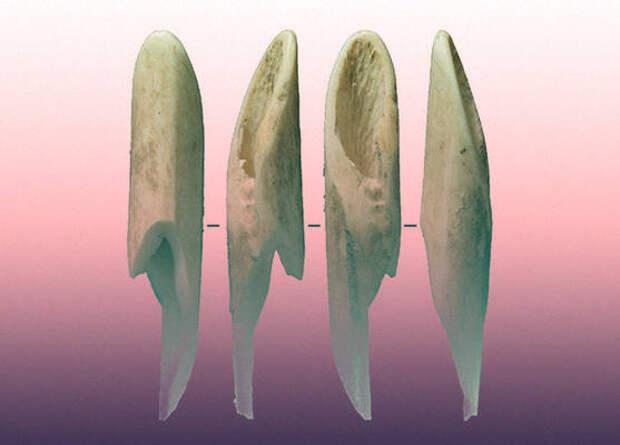 Австралийцы начали использовать костяные орудия еще 46 тысяч лет назад