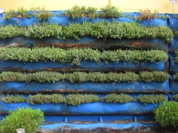 стена из трав