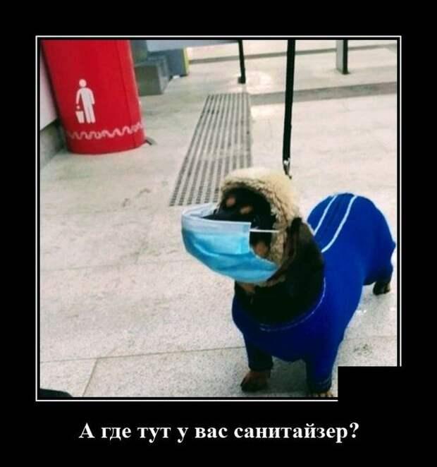 Демотиватор про санитайзер