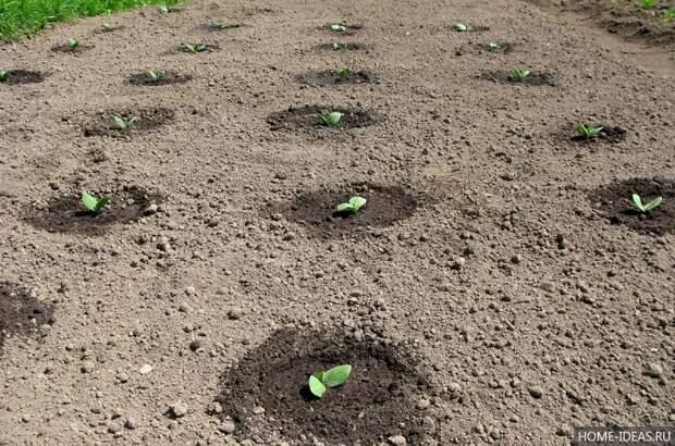 Советы: как повысить урожай огурцов