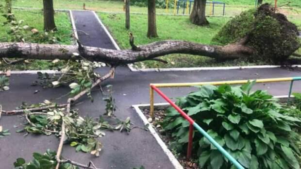 Режим ЧС ввели в Ярославской области из-за мощного урагана