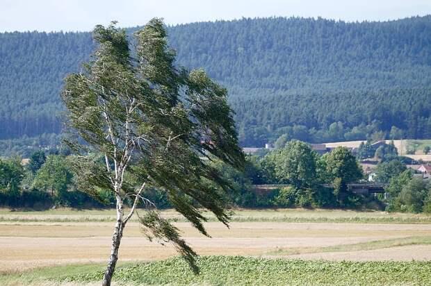 Усиление ветра ожидается в Удмуртии в понедельник