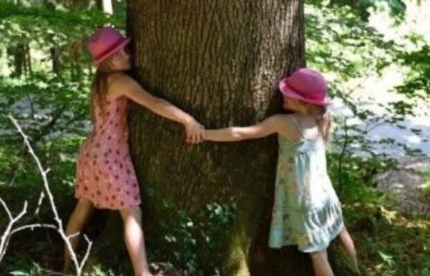 Деревья и их энергетика:  обнять рябину, а желание загадать у березы