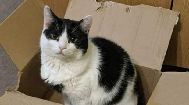 Морда кошки вытянулась от обиды и возмущения, когда она увидела, что в ее картонной коробке кто-то сидит