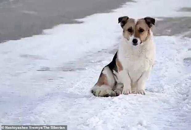 История о маметкинском Хатико берет начало летом этого года верность, грустно, животные, истории, собака, собаки, трогательно, хатико