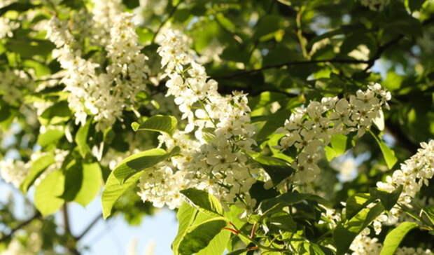 НаОмскую область обрушатся майские грозы с34-градусной жарой