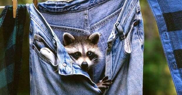 Хорошая новость отэкспертов: ваши джинсы стирать ненужно!