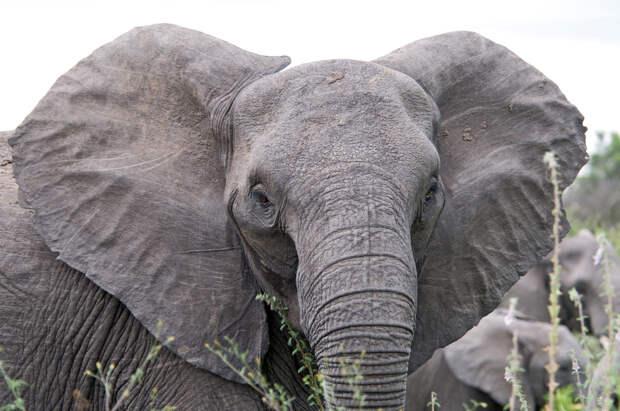 Слон защитил носорога от нападения браконьера в ЮАР