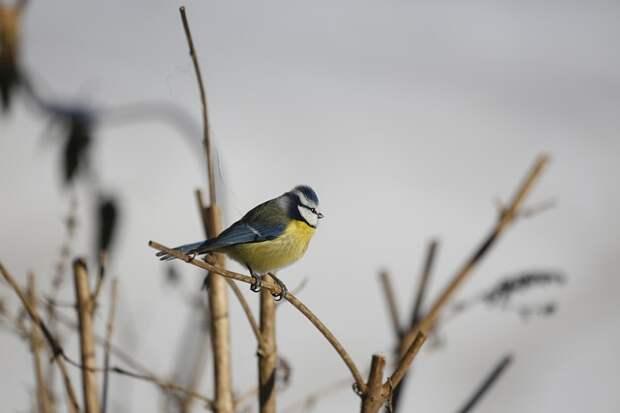 В Серебряном Бору заметили птицу, занесенную в Красную книгу