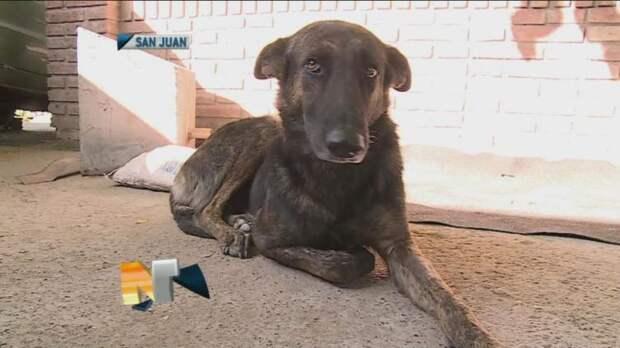 Верная собака преодолела 160 километров, чтобы найти людей, которые её когда-то спасли