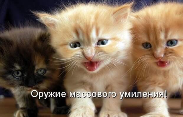 И любите крепко-крепко интересное, коты, смешное