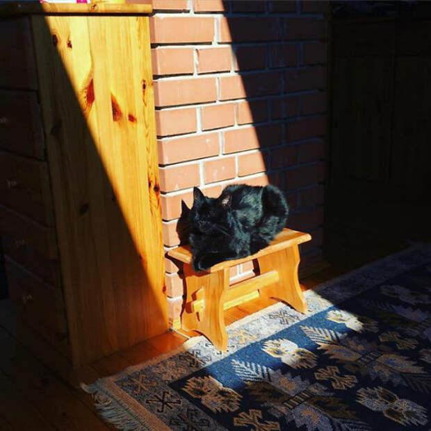 Котик блаженствует животные, котики, лучи, погреться, солнечные ванны, солнце, температура, тепло