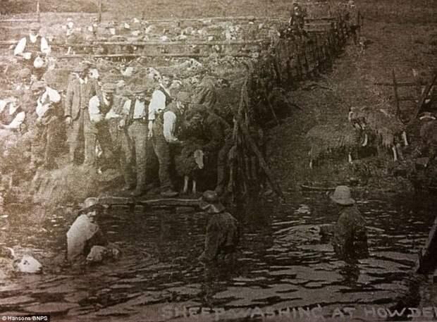 Конец 19 века, местные жители купают овец в мире, водохранилище, деревня, затопление, исторические фото, история, редкие кадры, фото
