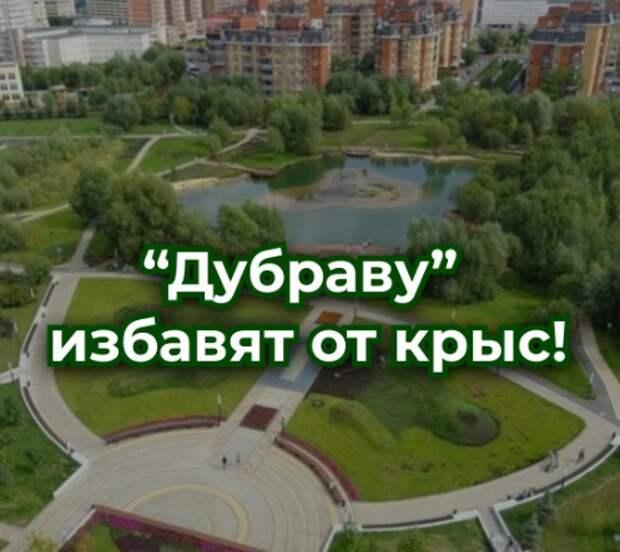 Во время дератизации в парке «Дубрава»  жителям отсоветовали выгуливать питомцев
