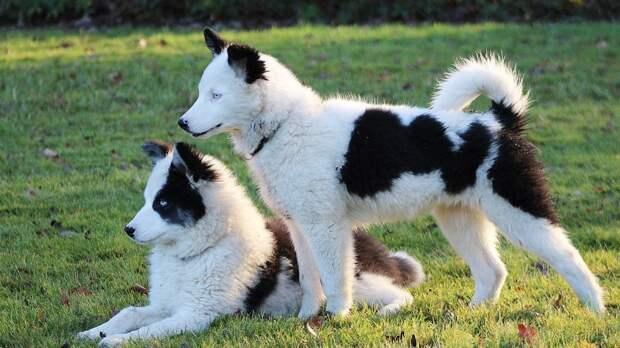 Шведские ученые определили, как личность владельцев влияет на стресс у собак
