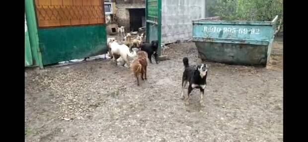 Неизвестные выпустили 300 собак из рязанского питомника