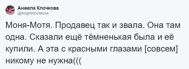 Пользовательница AngelKlochkova рассказала, что Моня уже полгода живёт в магазине в мире, животные, зоомагазин, люди, милота, морская свинка, реакция