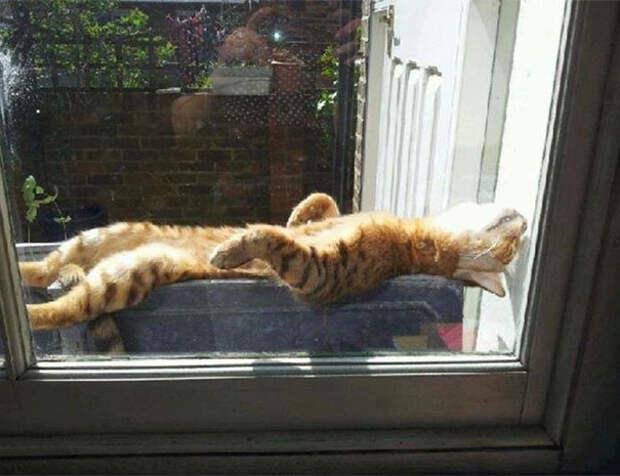 Р-р-р-р-р-роскошшшшшшно... животные, котики, лучи, погреться, солнечные ванны, солнце, температура, тепло