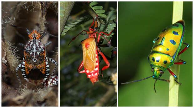 У насекомых все как у людей - они тоже делятся на букашек и жуков жуки, интересное, красивое, насекомые