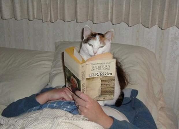 Я же говорю, ничего интересного весело, коты, повадки, смешно, эмоции