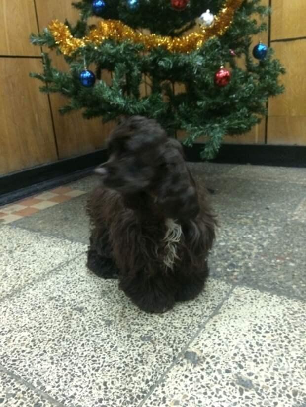 В суровый мороз полицейские Москвы спасли из сугроба щенка спаниеля