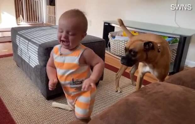 Попытки малыша повторить движения за играющей собакой умилили соцсети