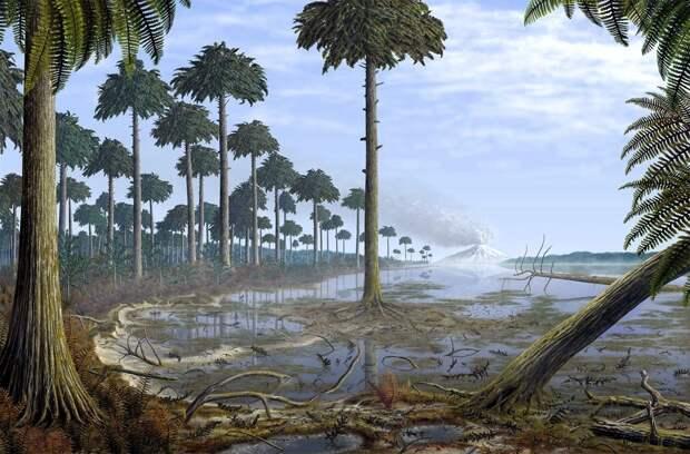 В Нью-Йорке нашли останки древнейших лесов на планете
