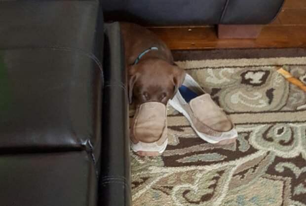 Релакс по-собачьи! :) Как смешно отдыхают наши любимцы…