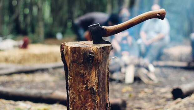 Число обращений о незаконных рубках в лесах Подмосковья начало снижаться