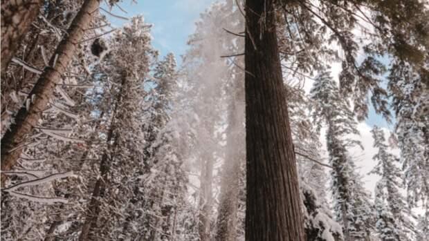 Холод, дождь и снег обещают в Алтайском крае 21 апреля