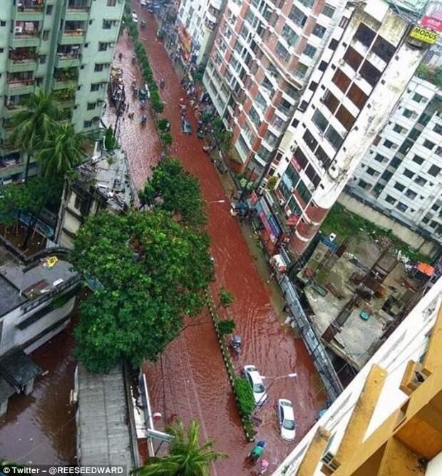 Столицу Бангладеш затопили реки крови Ид-аль-Адха, бангладеш, дакка, курбан-байрам, мусульманские традиции