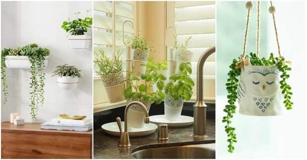 20 универсальных идей украшения небольшого пространства растениями