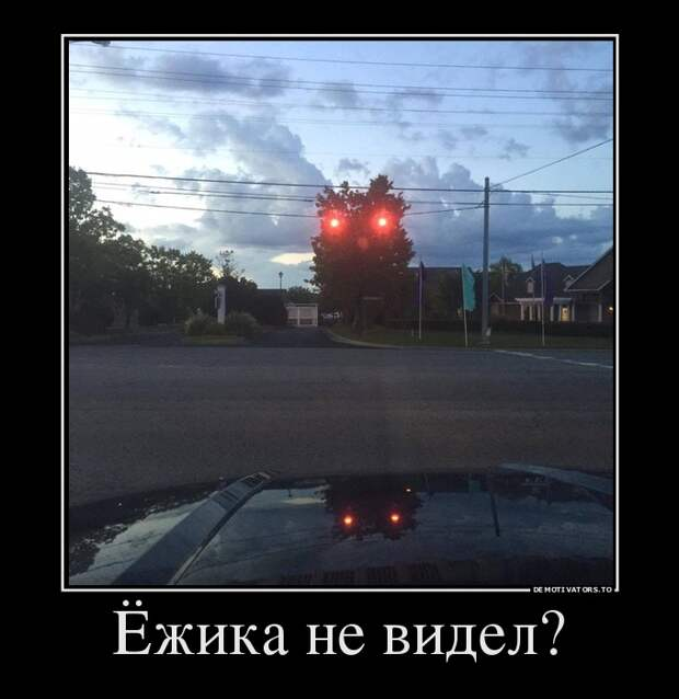 Ежика не видел демотиватор, прикол, юмор