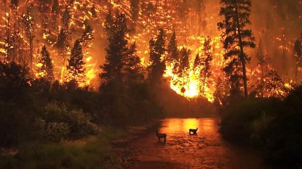 Почти 20 лесных пожаров потушили в Ленобласти за месяц