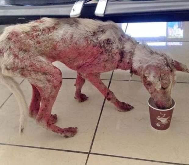 Умирающий пес запрыгнул к незнакомцам в автомобиль. Этот случай изменил всю его дальнейшую жизнь…