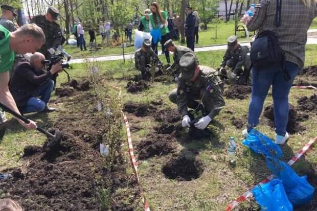 Более 600 саженцев высадили в парке авиаторов в Артеме