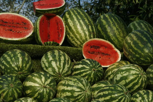 Как выбрать спелый и вкусный арбуз